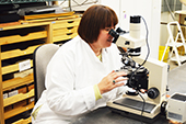 Photo: Professor Judith Habicht Mauche examining with a microscope
